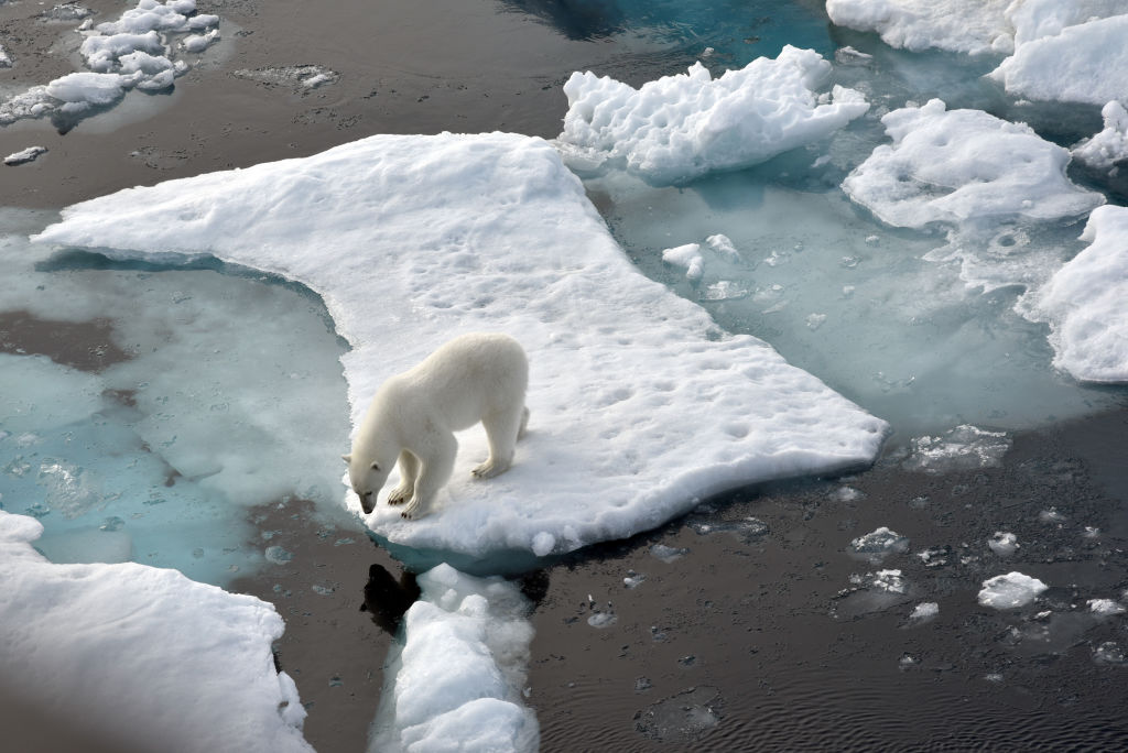 A polar bear stands on an ice floe in the Arctic Ocean.