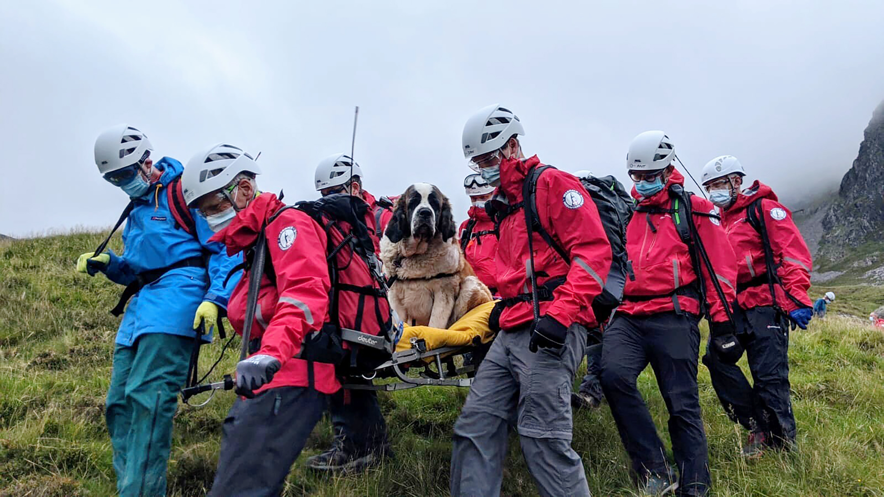 Sixteen volunteers from Wasdale mountain rescue team take turns to carry Daisy, a 121lb St Bernard dog, from England's highest peak on July 26, 2020.