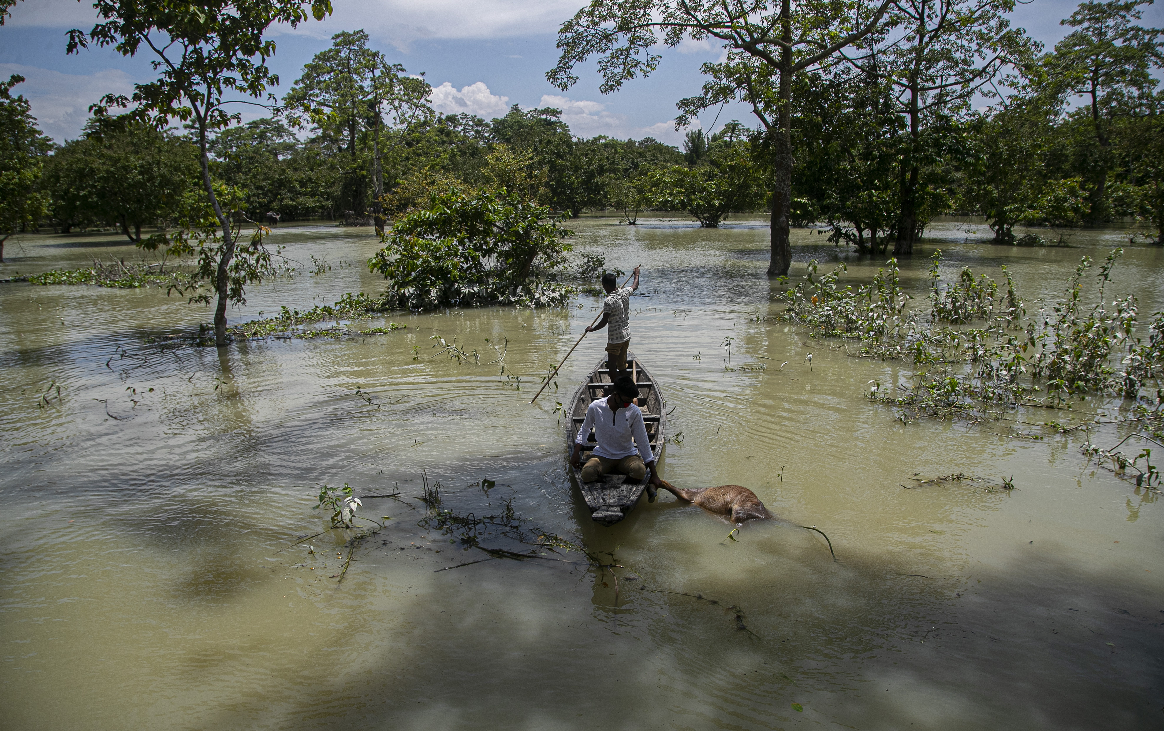 An Indian forest guard on takes away the carcass of a wild buffalo calf through flood water at the Pobitora wildlife sanctuary in Pobitora, Morigaon district, Assam, India, on July 16, 2020.