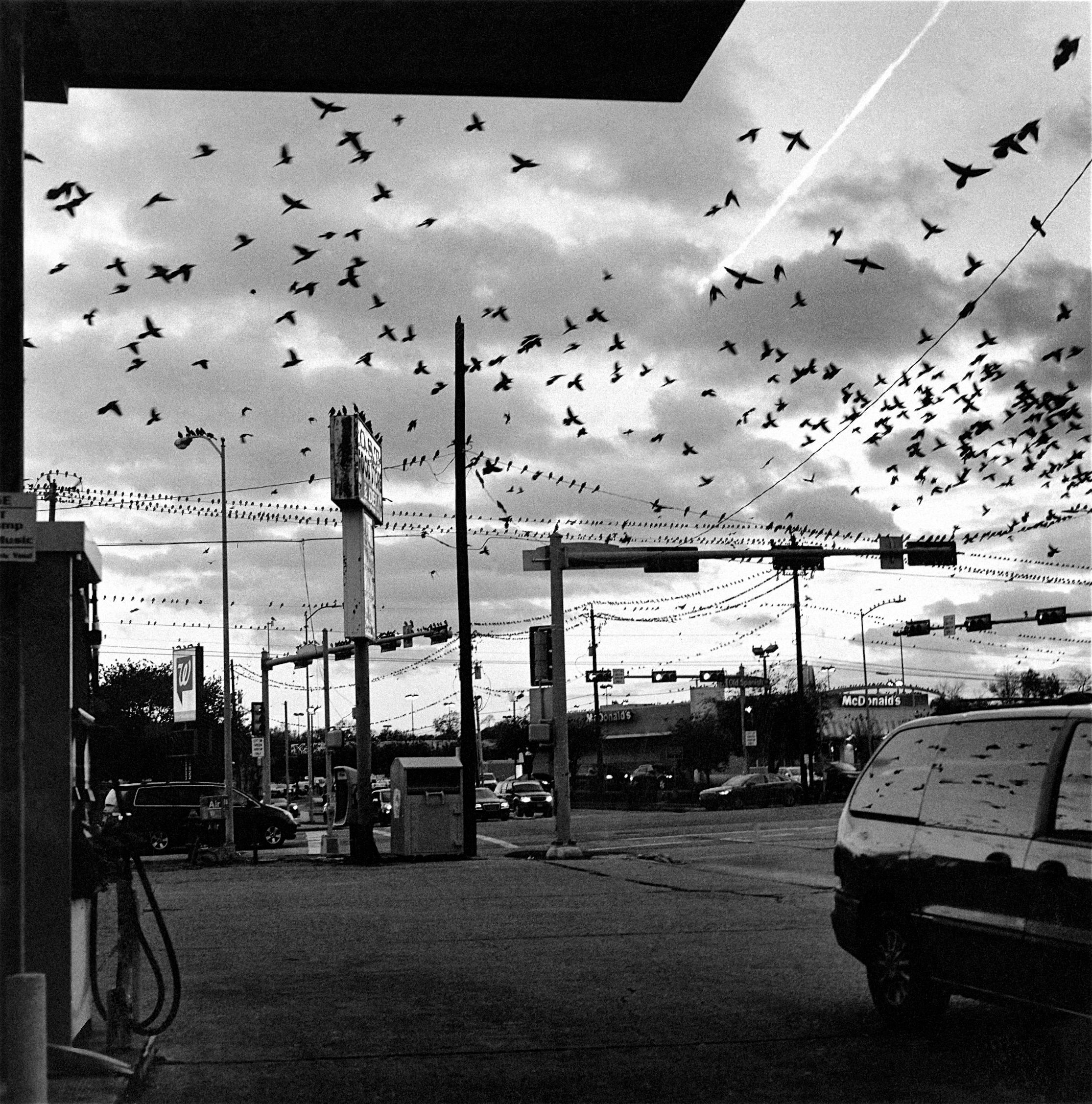 Black Birds (2013)
