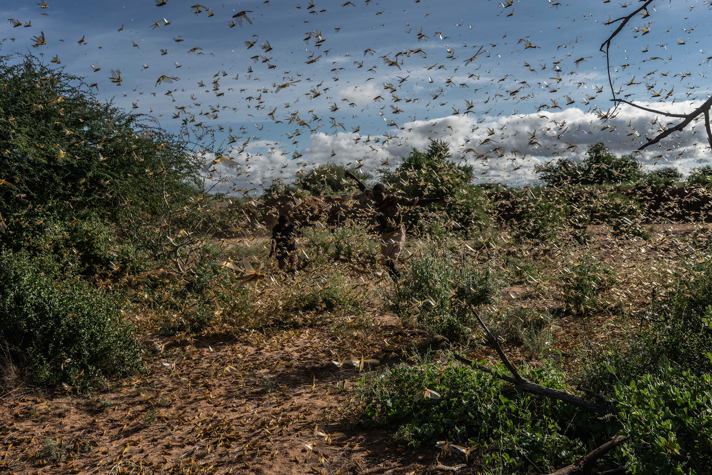 Two men chase away a swarm of desert locusts early in the morning, on in Samburu County, Kenya on May 21, 2020.