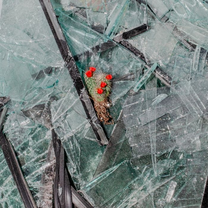 A small cactus rests on broken glass. Cleanup efforts have been left to volunteers, with authorities all but invisible.