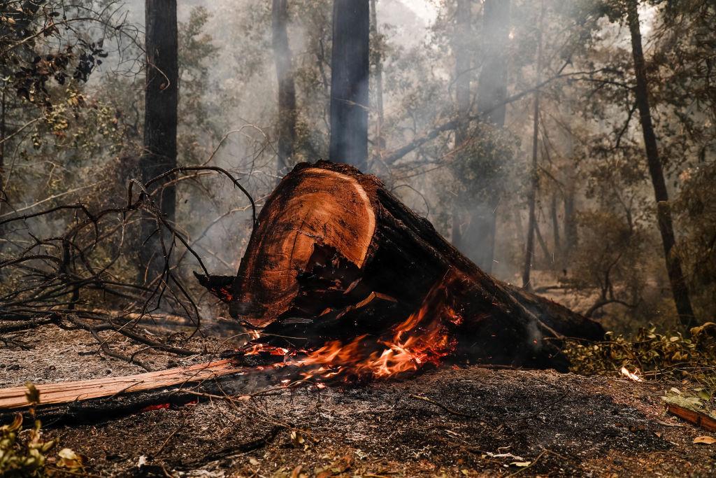 A redwood tree burns near Big Basin Redwoods State Park Headquarters & Visitor Center in Boulder Creek, Calif., on Aug. 20, 2020.