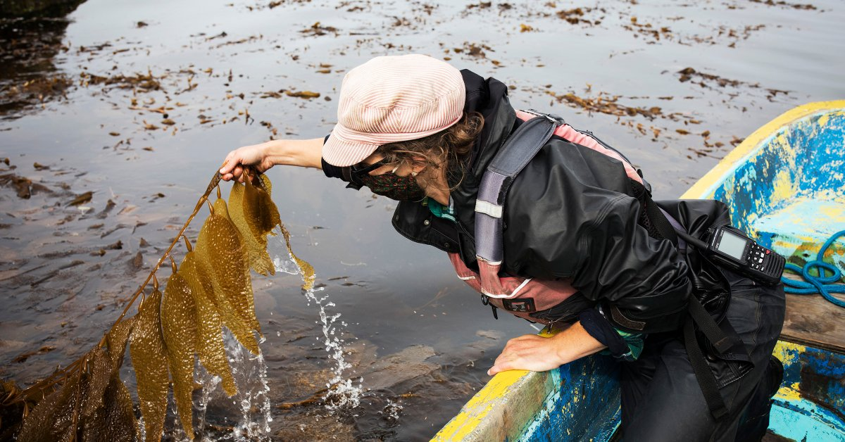 The Ocean Farmers Trying to Save the World With Seaweed thumbnail
