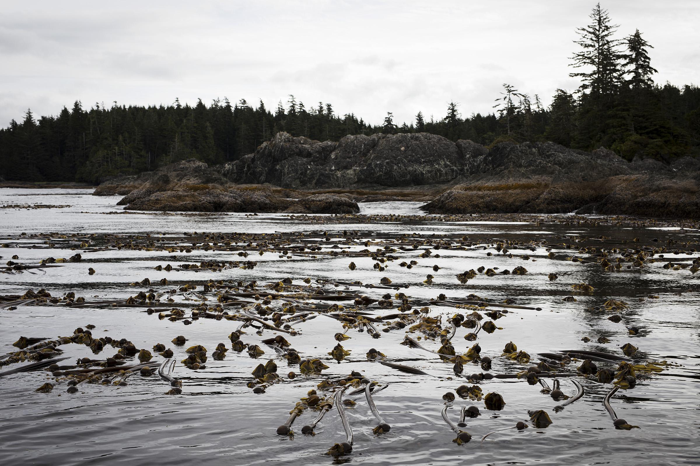 seaweed-farming-climate-07