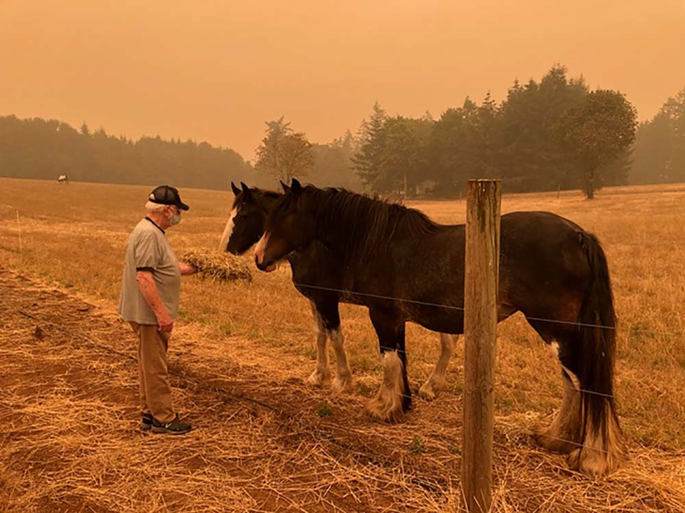 Guy Urbani, Ellen Urbani's father, feeding the visiting draft horses on her farm in in West Linn, Oregon, on Sep. 10.