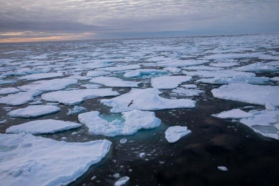 Arctic Sea Ice Minimum