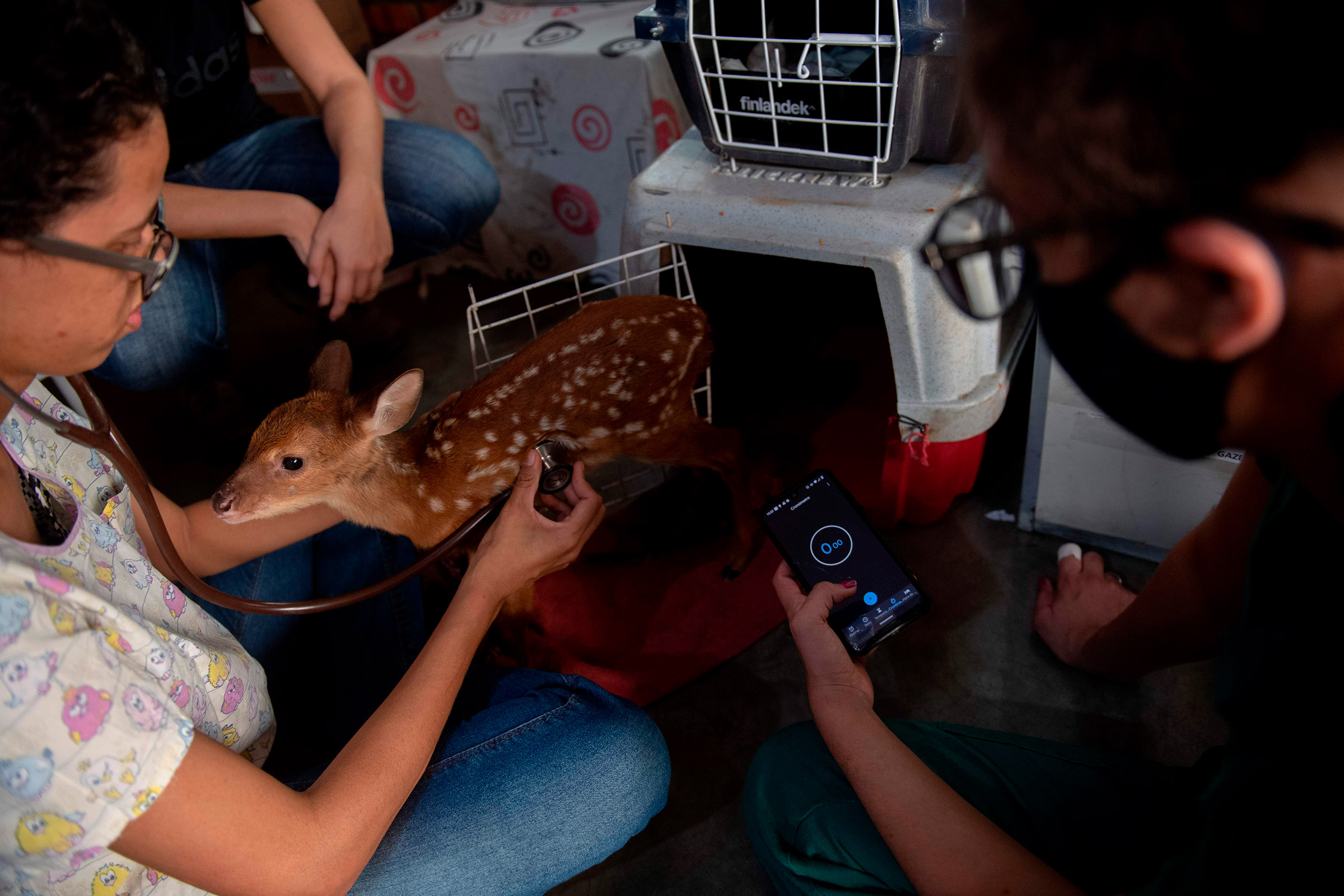 A deer receives care on Sept. 17.