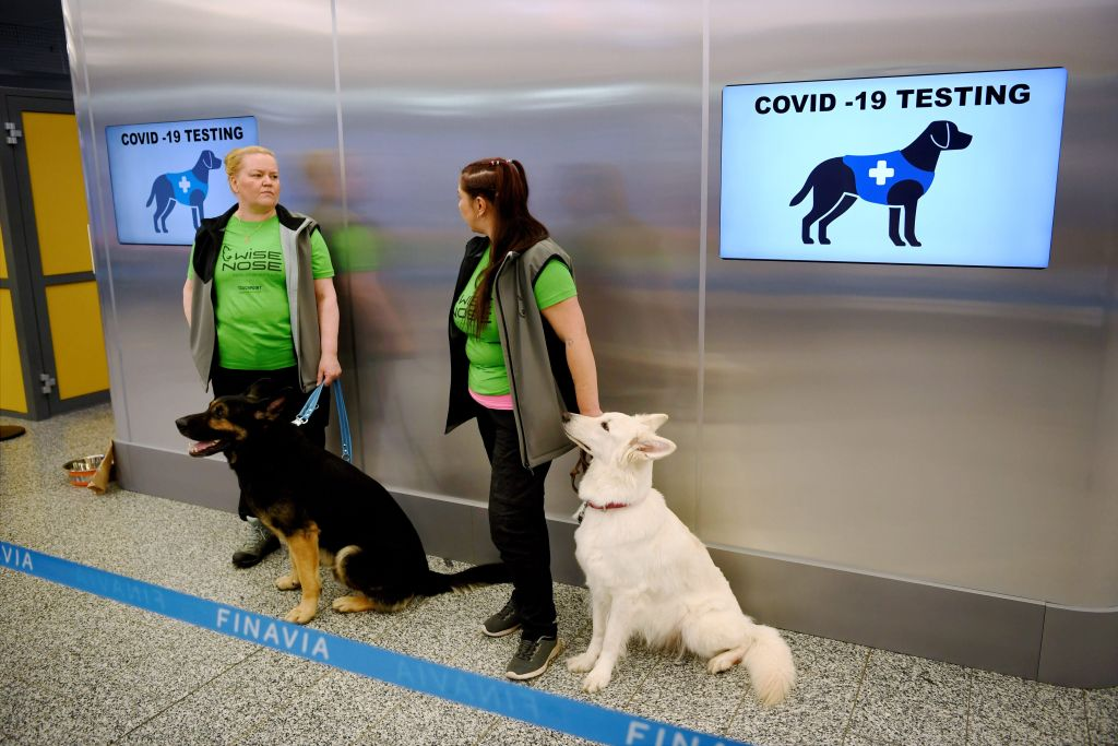 The coronavirus sniffer dogs Valo (L) and E.T. sit near their trainers at the Helsinki airport in Vantaa, Finland, to detect the COVID-19 from the arriving passengers, on September 22, 2020.