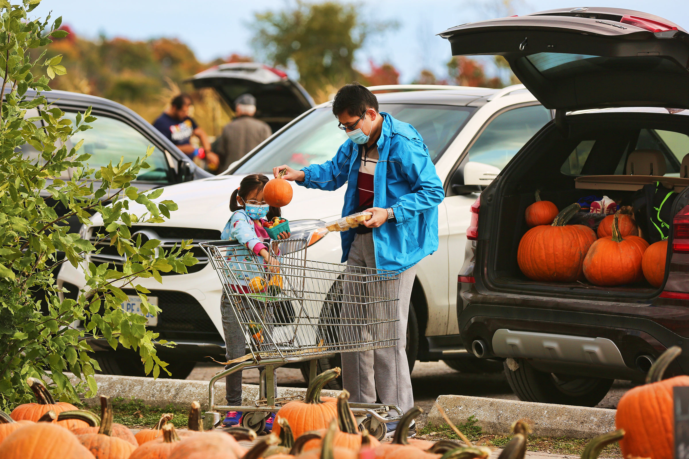 People wearing face masks to protect them from the COVID-19 select pumpkins for Halloween at a farm in Markham, Ontario, on Oct. 03
