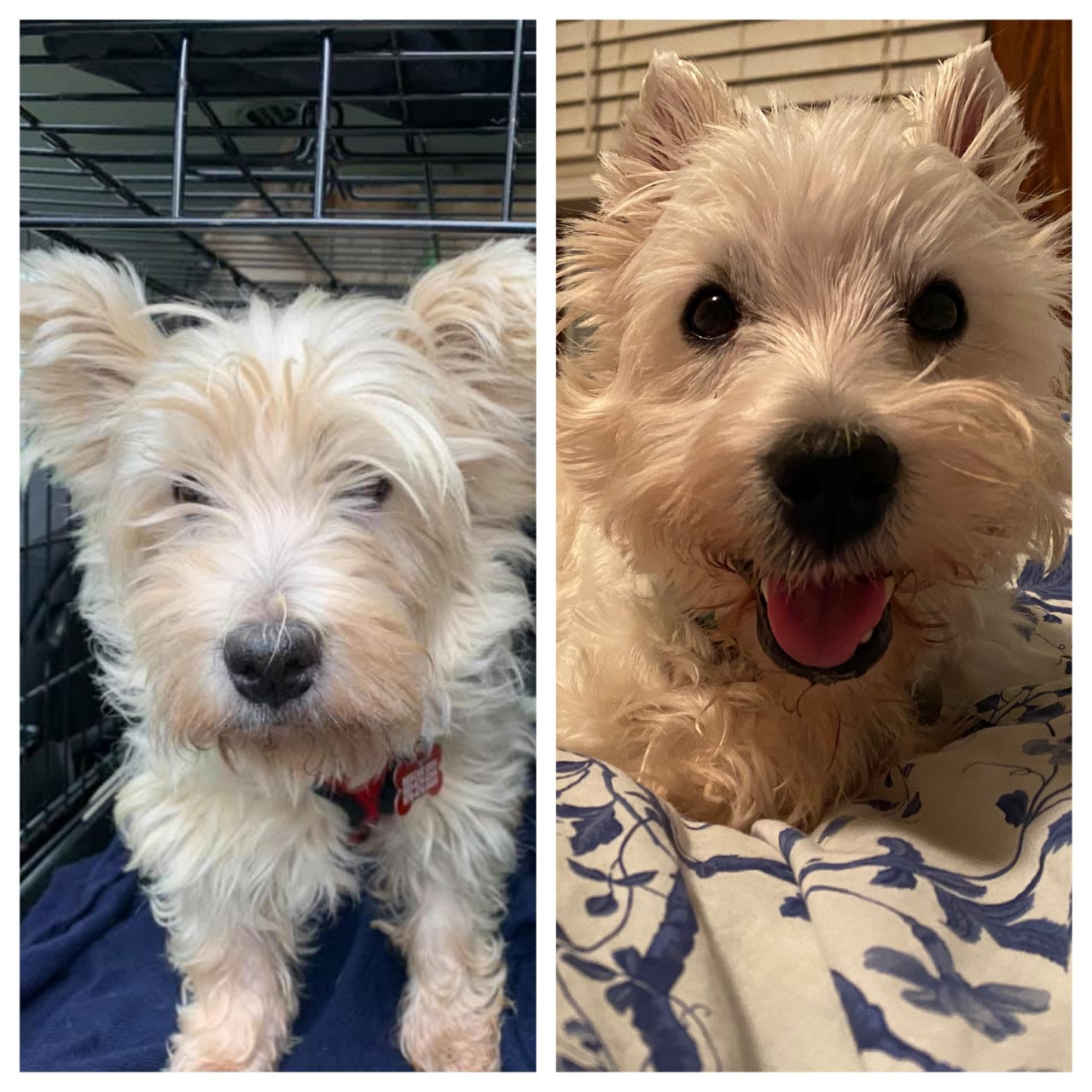 Finbarr before being adopted (L) and after (R)