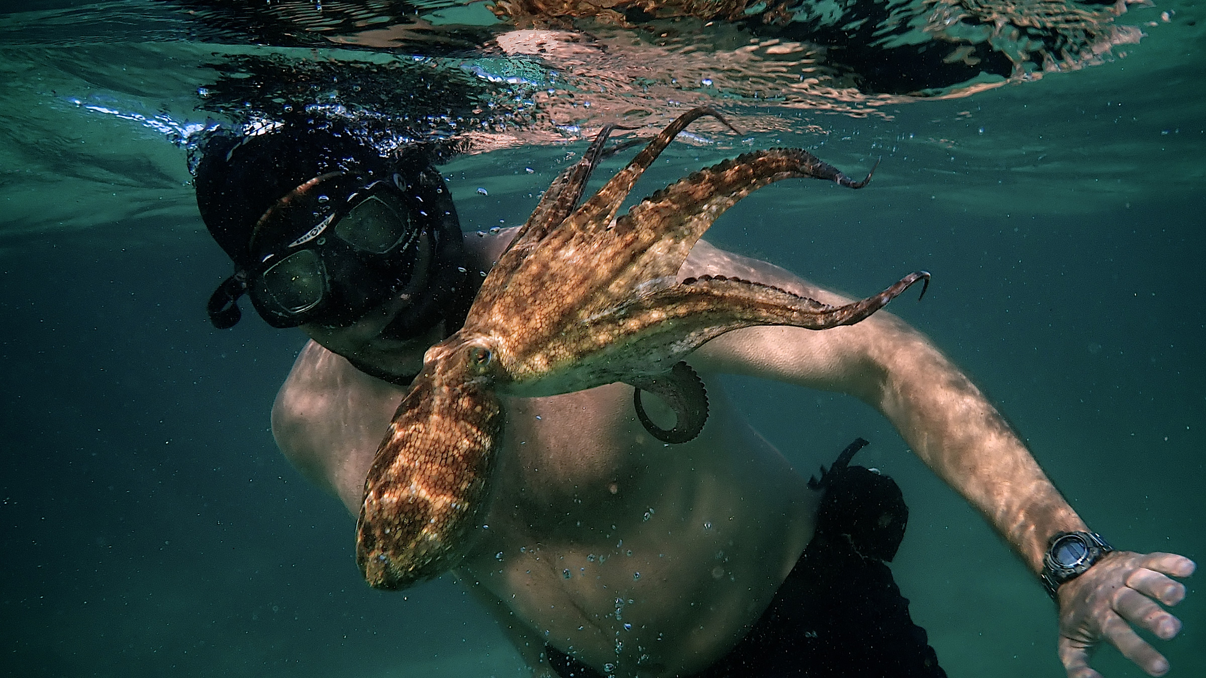 Craig Foster and the octopus.