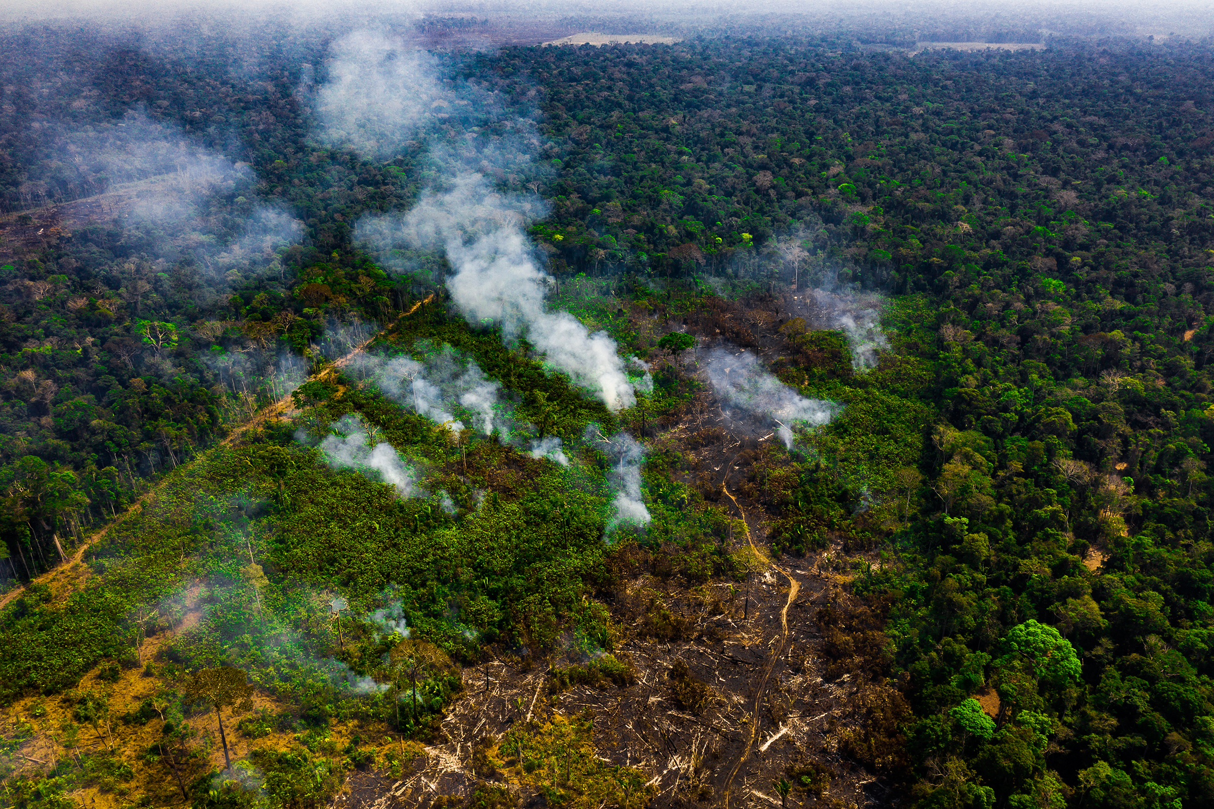The fires in August 2019 were not limited to private land but also broke out in protected areas, including the Jacundá National Forest in Rondônia.