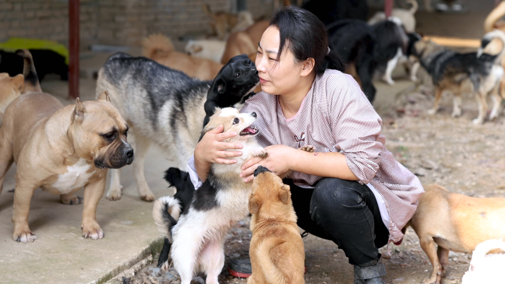 Li Heng, a volunteer for the Furry Angels Haven animal shelter in Wuhan, China is shown surrounded by rescue dogs at the organization's new premises in this still taken from a video shot by TIME's Zhang Chi on Oct. 13, 2020.