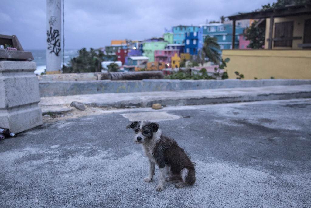 A dog roams the streets of the La Perla neighborhood in Old San Juan as residents prepare for a direct hit from Hurricane Maria on September 19, 2017 in San Juan, Puerto Rico.