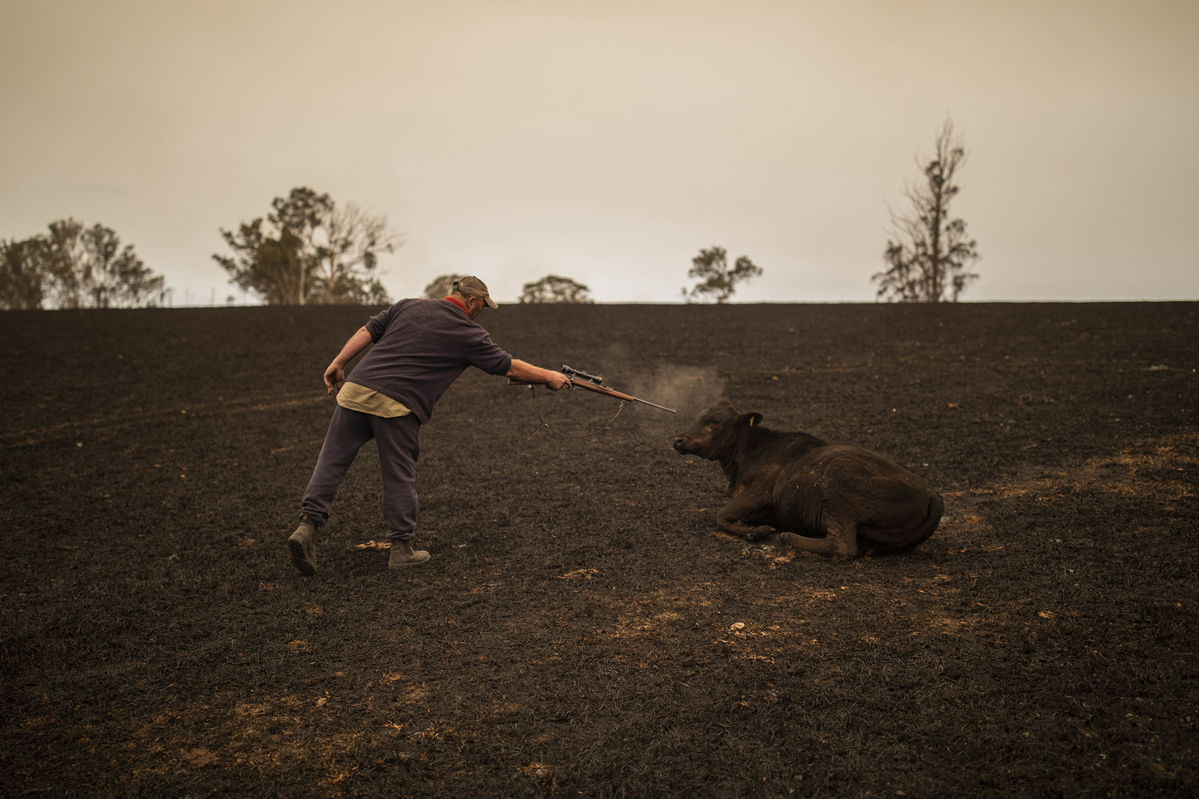 A resident puts down a cow that was severely wounded after a bushfire ravaged a paddock in Coolagolite, New South Wales, Australia, on Jan. 1.