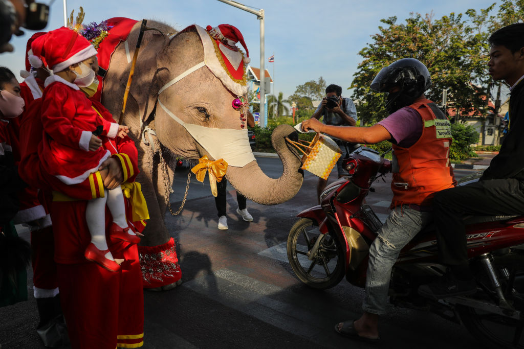 Thai elephants dressed as Santa Claus deliver face masks to motorists on a busy street corner in Phra Nakhon Si Ayutthaya, Thailand on Dec. 23, 2020.