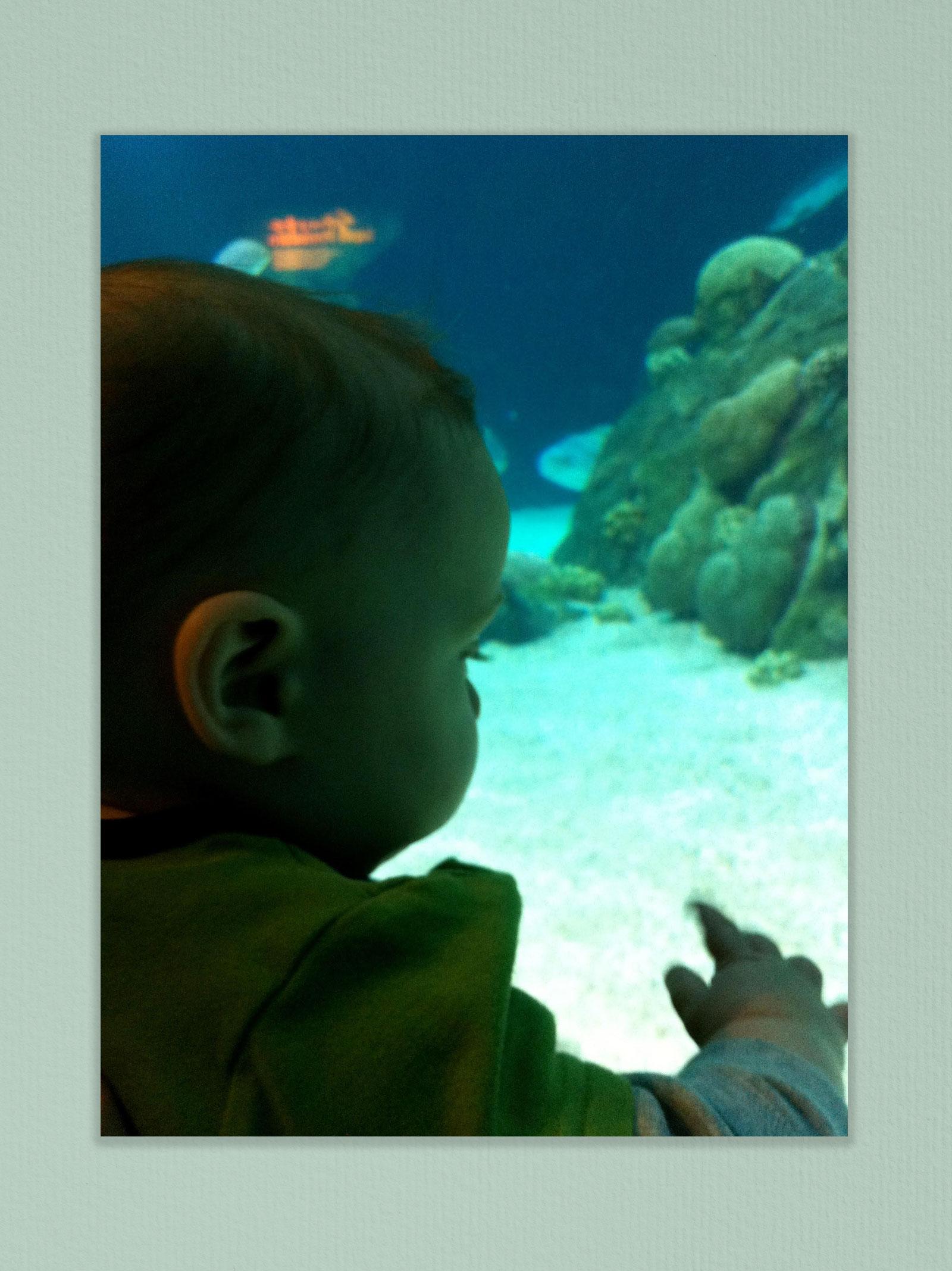 Ronan at the aquarium.