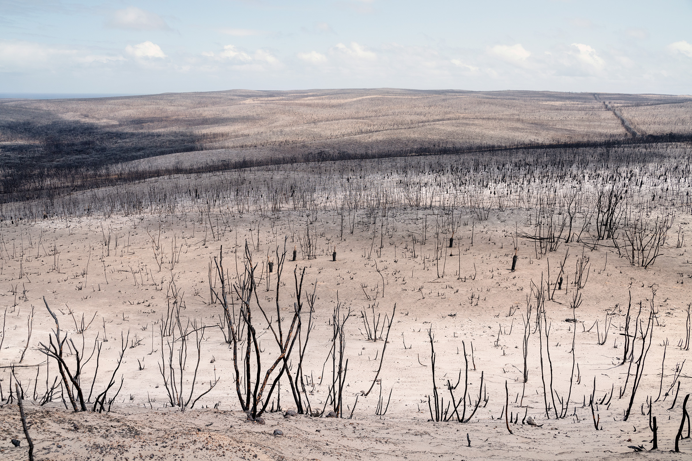 A view of bushfire-ravaged Flinders Chase National Park on Kangaroo Island, South Australia, in January 2020.