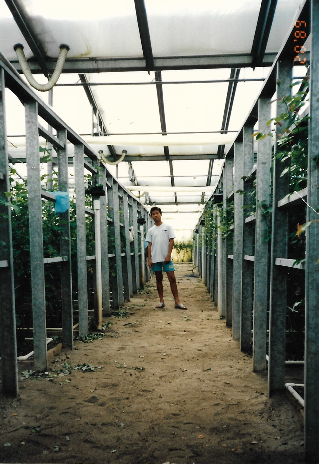 Joseph Chong in his family's greenhouse in California in 1989.