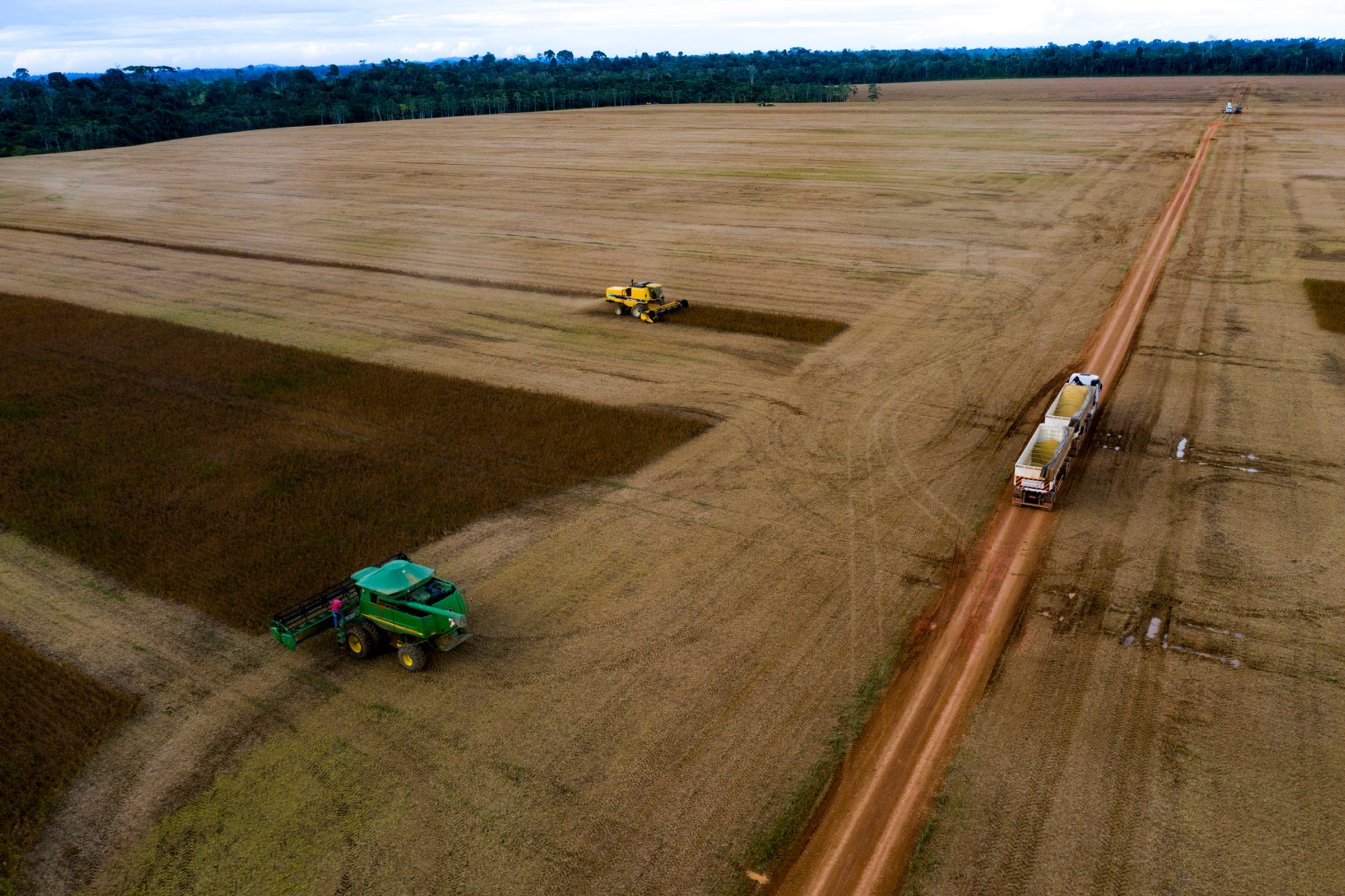 A soybean plantation in Rondonia, Brazil. The country exports 80% of its soybean crop to China