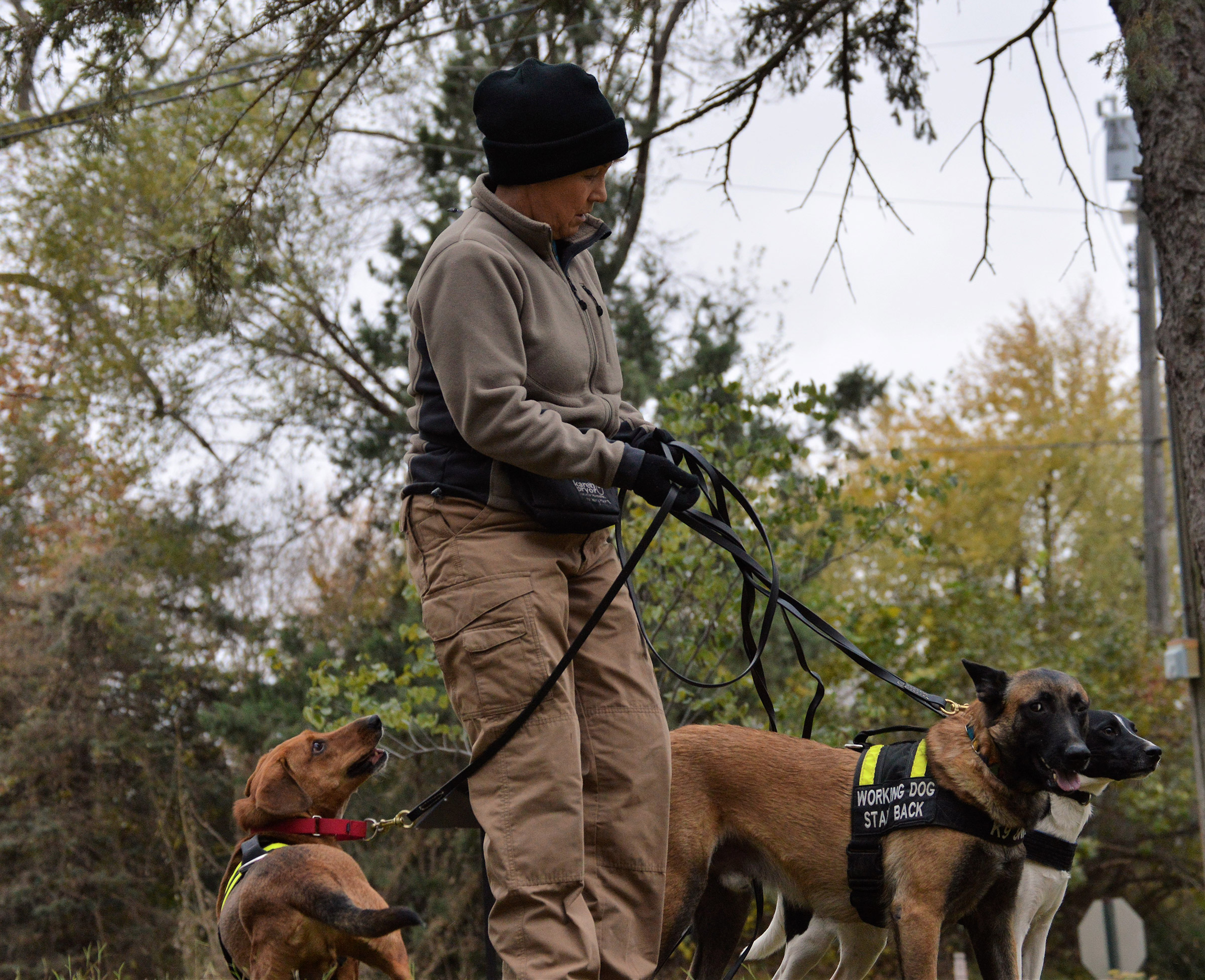 Pet detective Karin TarQwyn with her team of K9s