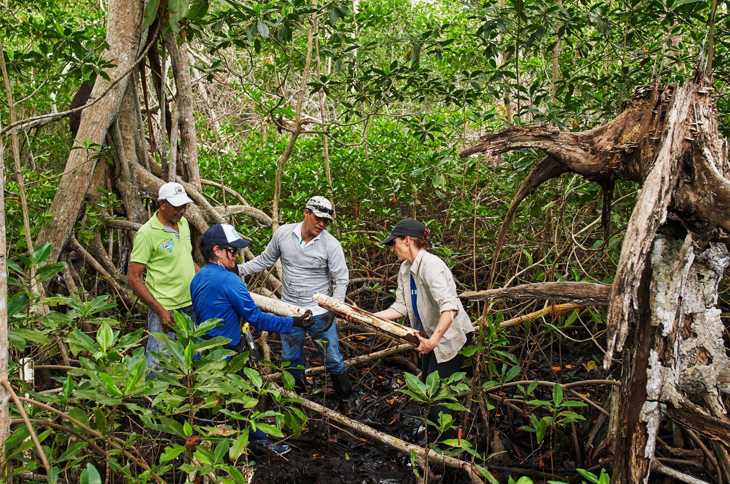 Researchers working for Conservation International take a soil sample to test carbon levels of mangrove trees in Bogotá