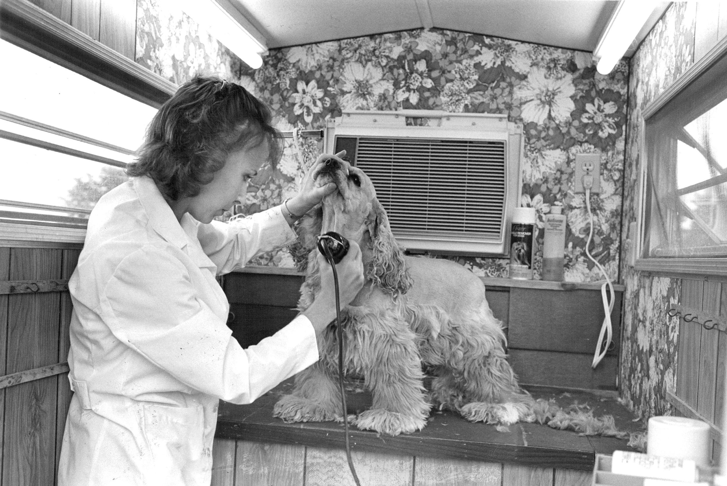 Angela Eaton grooms  Dutchess  inside  House Calls  trailer in 1982. The unit is equipped with a bath, heater, air conditioner and dryer.