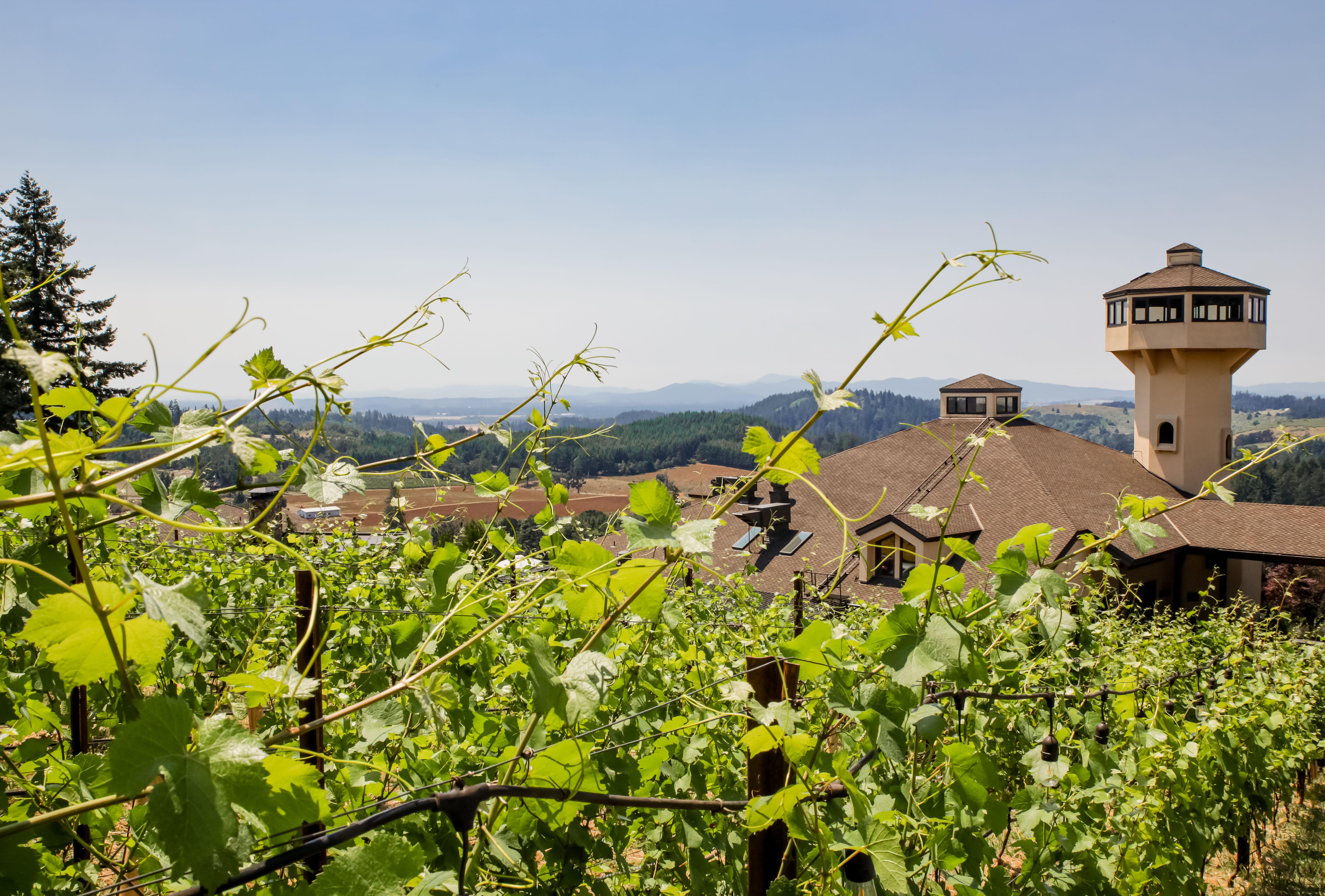 Vines at Willamette Valley Vineyards on June 29, 2021.