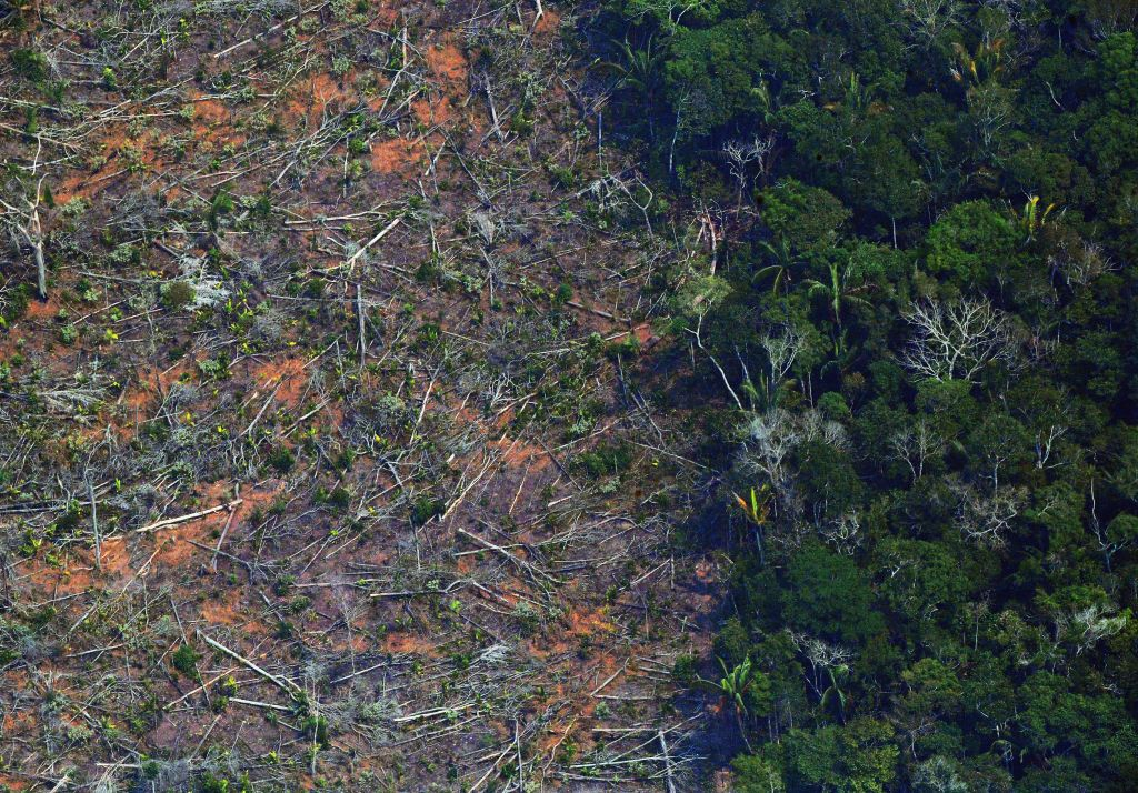 A deforested piece of land in the Amazon rainforest in the state of Rondonia, in northern Brazil, on Aug. 23, 2019.