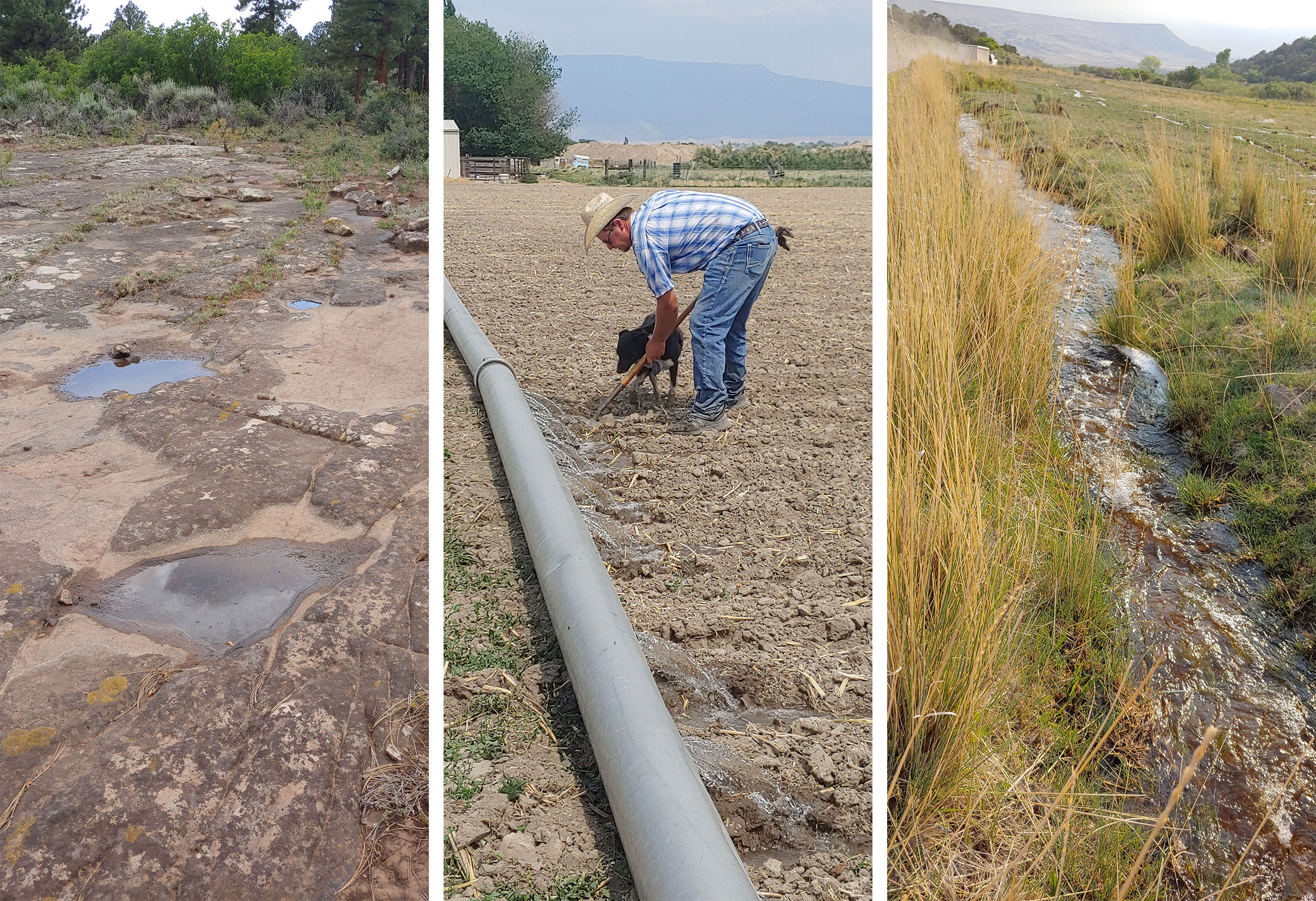 Limited irrigation water this spring in the West has put pressure on operations like those at VanWinkle Ranch.