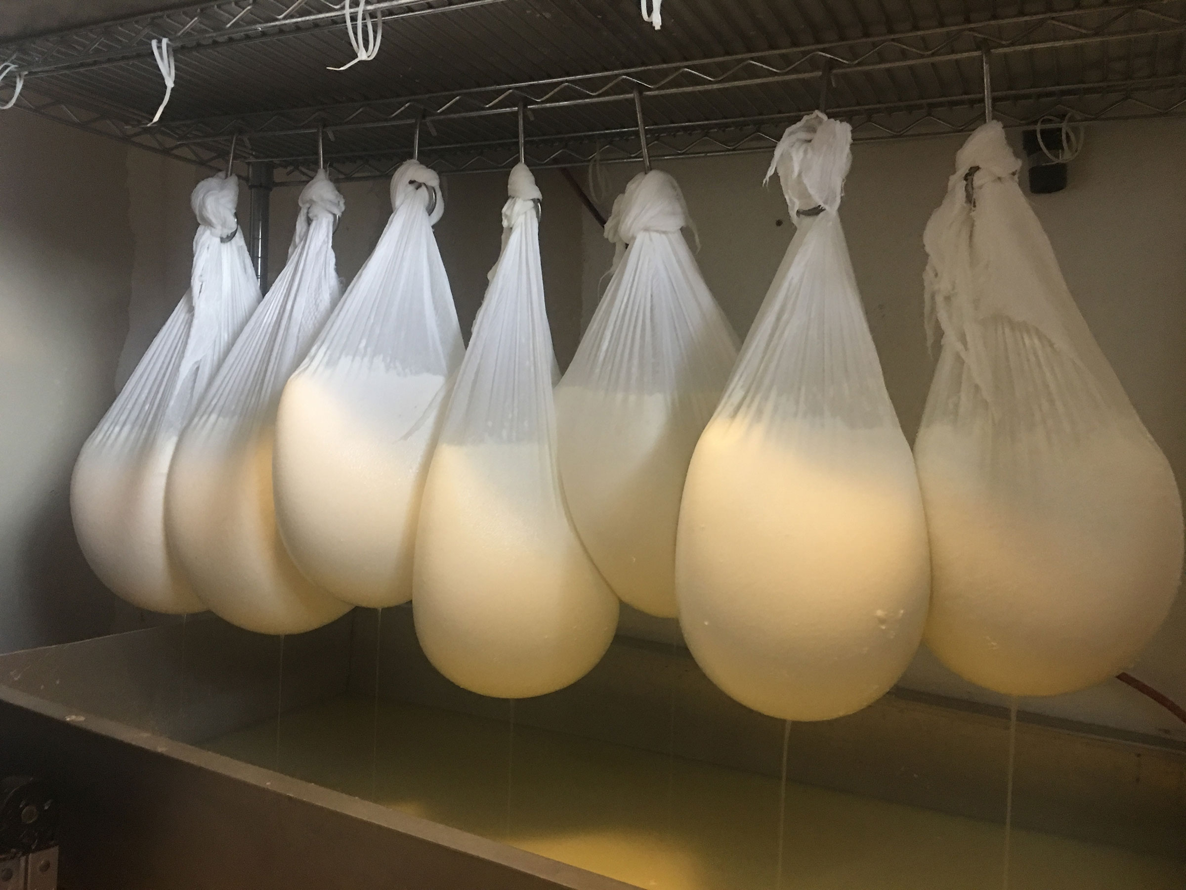 Chèvre draining at Picabo Desert Farm. Gail Ansley used to sell six figures of yogurt and cheese; this year, she sold all of her goats and shut down the business.
