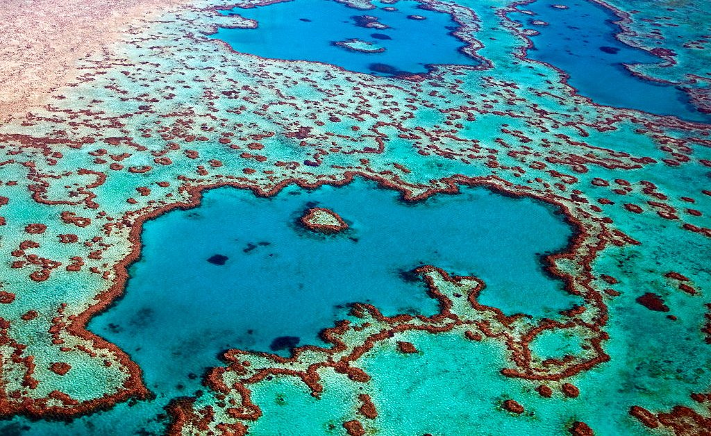 UNESCO Says Australia's Great Barrier Reef Isn't In Danger Yet. Many Environmentalists and Divers Disagree
