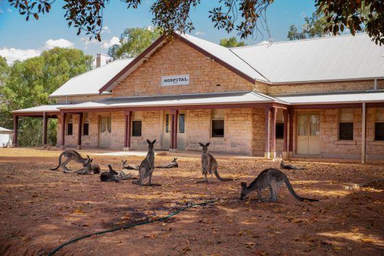 Wilcannia Hospital Kangaroos