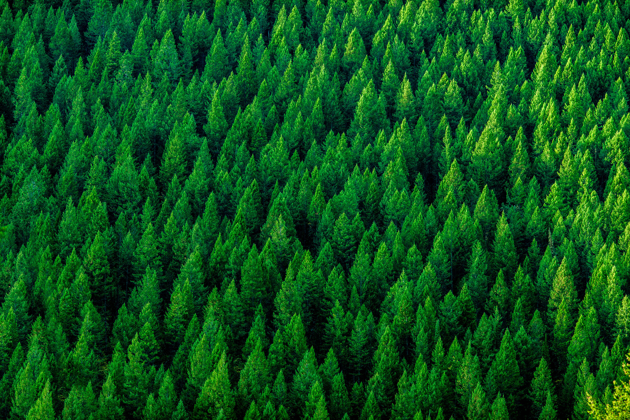 We Can Use Trees to Fight Climate Change. Here's How | Time