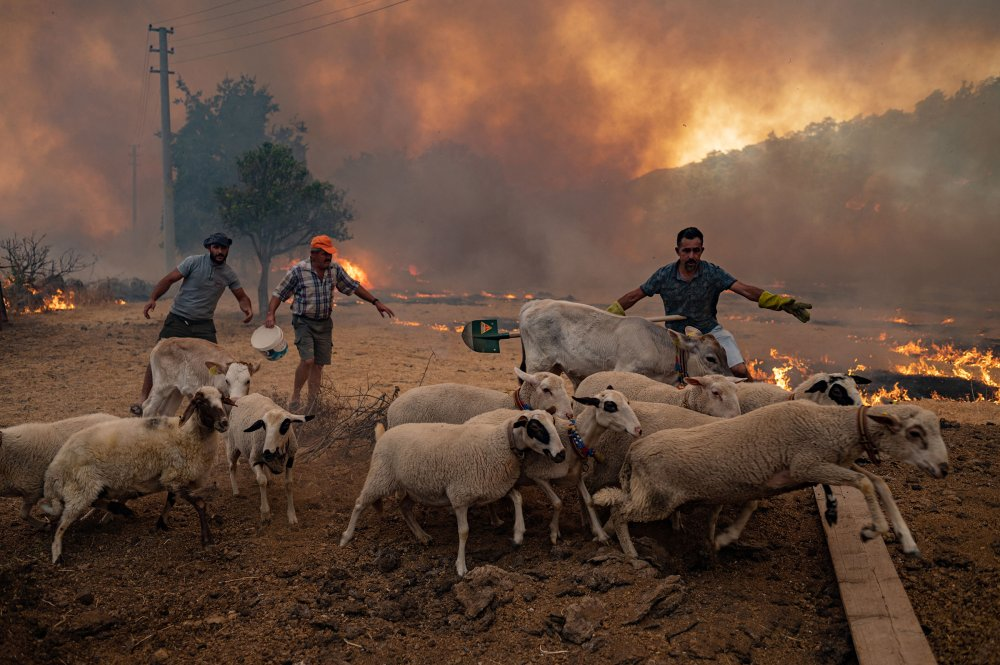 Men gather sheeps to take them away from an advancing fire in Mugla, Marmaris district, Turkey on Aug. 2.