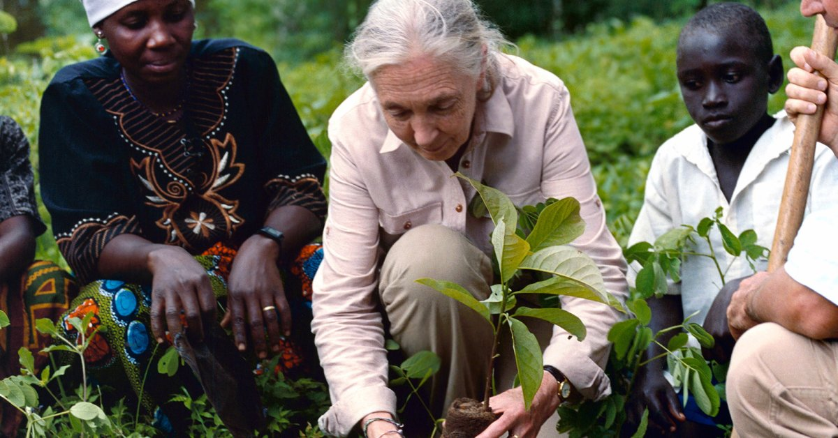 Jane Goodall's New Effort to Plant Trees and Restore Forests